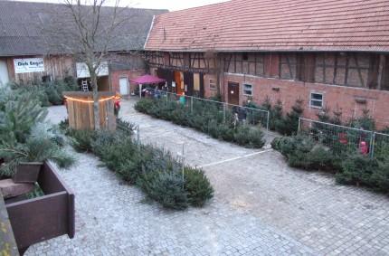 Weihnachtsbaumverkauf 2015