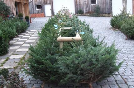 Weihnachtsbaumverkauf 2016