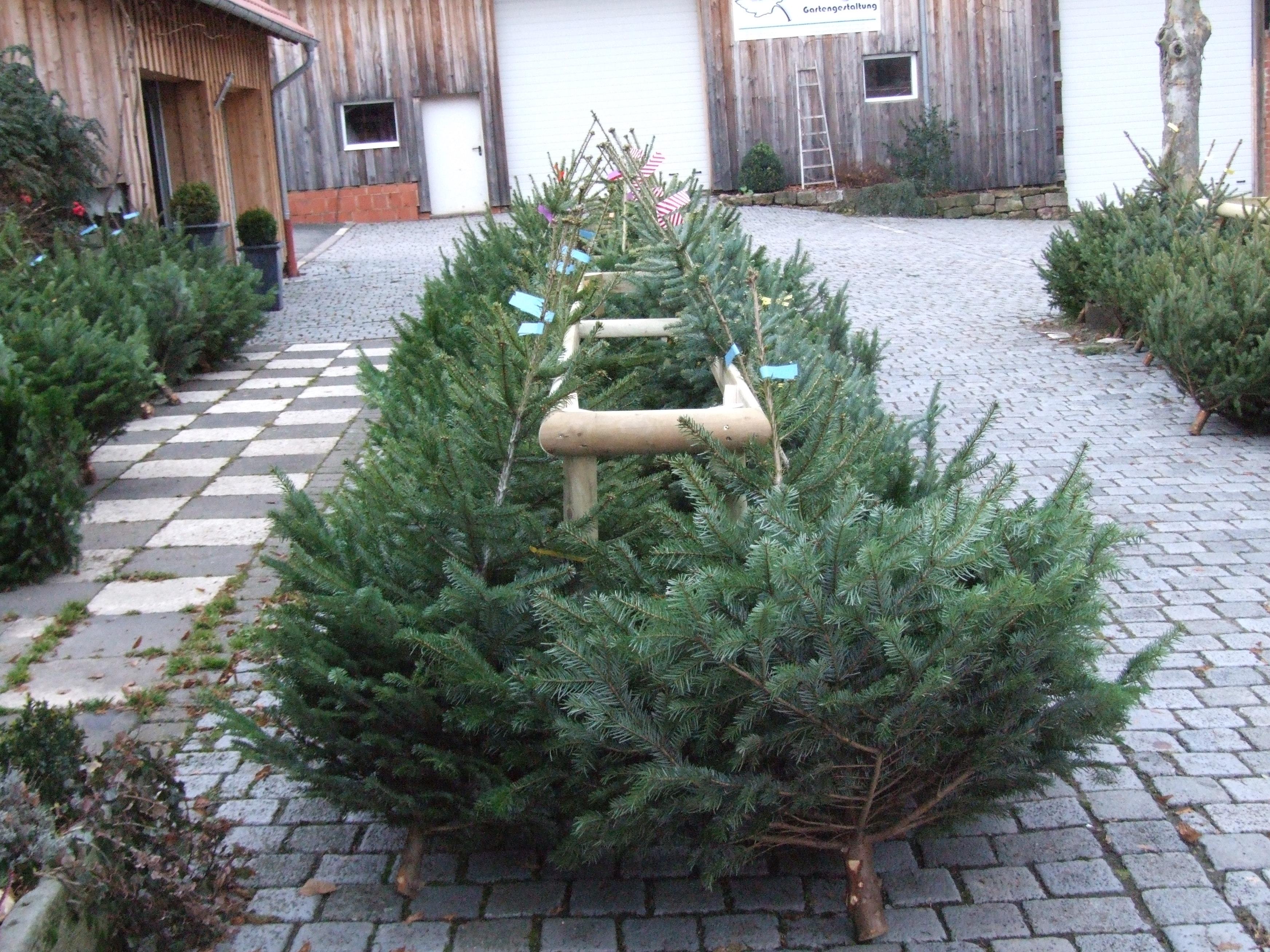 Weihnachtsbaumverkauf 2016 gartengestaltung engel for Gartengestaltung 2016