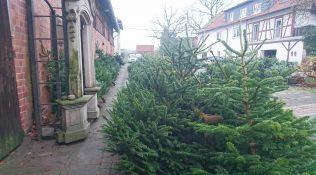 Weihnachtsbaum – Verkauf 2018
